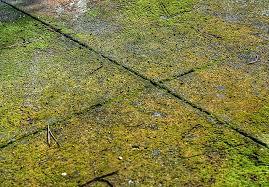 Mossy sidewalk